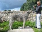 irish-wolfhound80.jpg