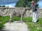irish-wolfhound82.jpg