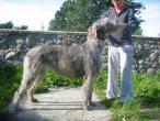 irish-wolfhound88.jpg