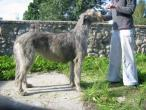 irish-wolfhound90.jpg