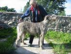 irish-wolfhound93.jpg