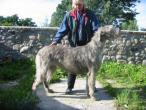irish-wolfhound94.jpg